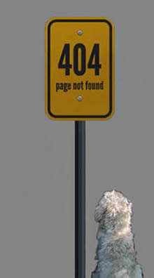 A dog staring at a 404 sign-post